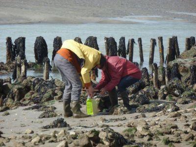 Pêche à pieds sur la côte de Noirmoutier